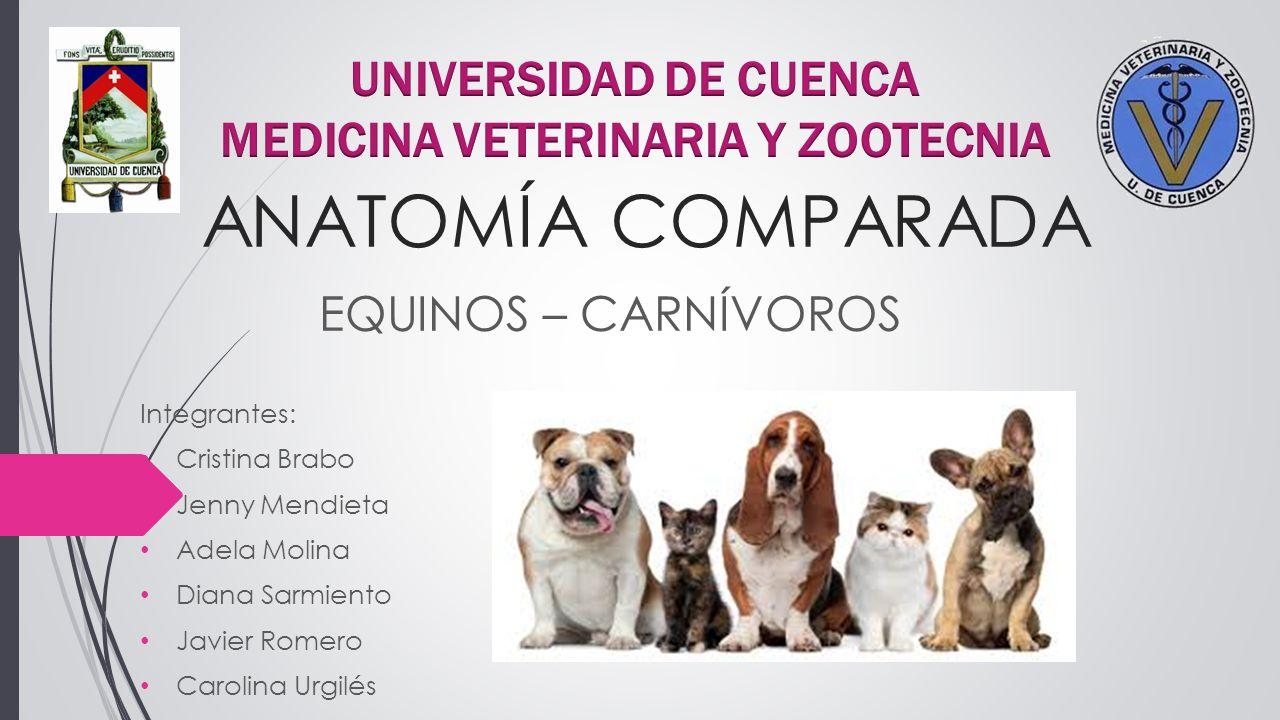 Hermosa Anatomía Comparada Veterinaria Motivo - Imágenes de Anatomía ...