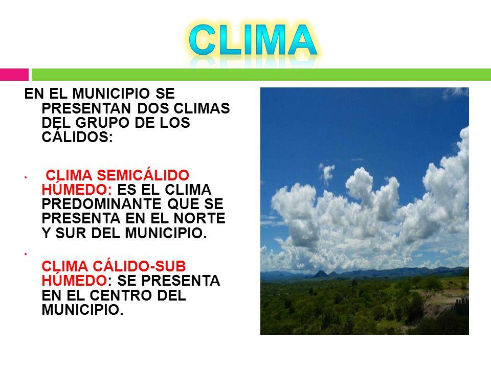 CLIMA EN EL MUNICIPIO SE PRESENTAN DOS CLIMAS DEL GRUPO DE LOS CÁLIDOS: