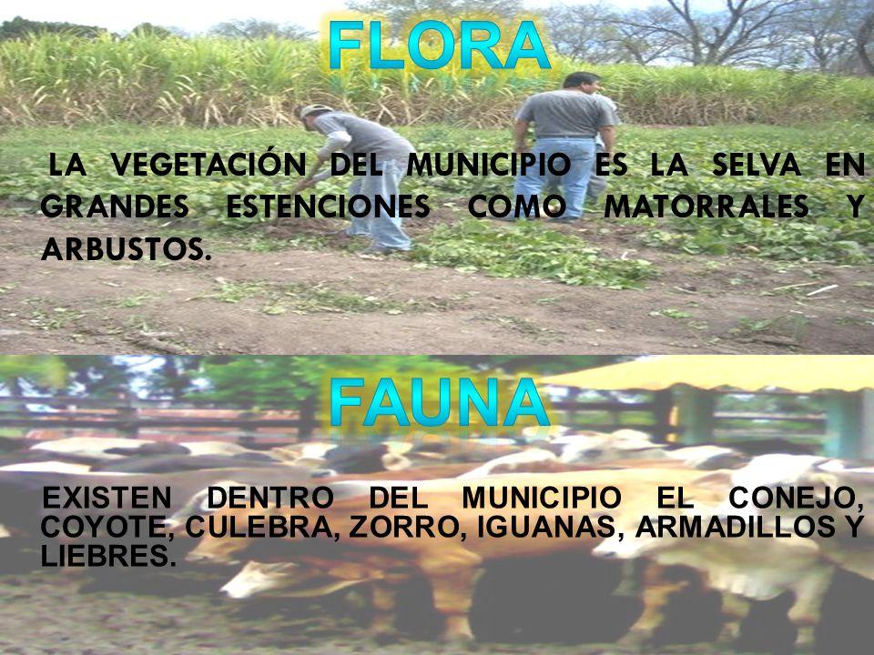 FLORA LA VEGETACIÓN DEL MUNICIPIO ES LA SELVA EN GRANDES ESTENCIONES COMO MATORRALES Y ARBUSTOS. FAUNA.