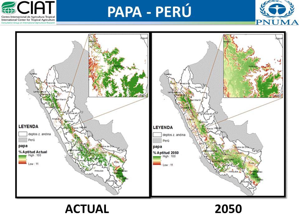 PAPA - PERÚ ACTUAL 2050
