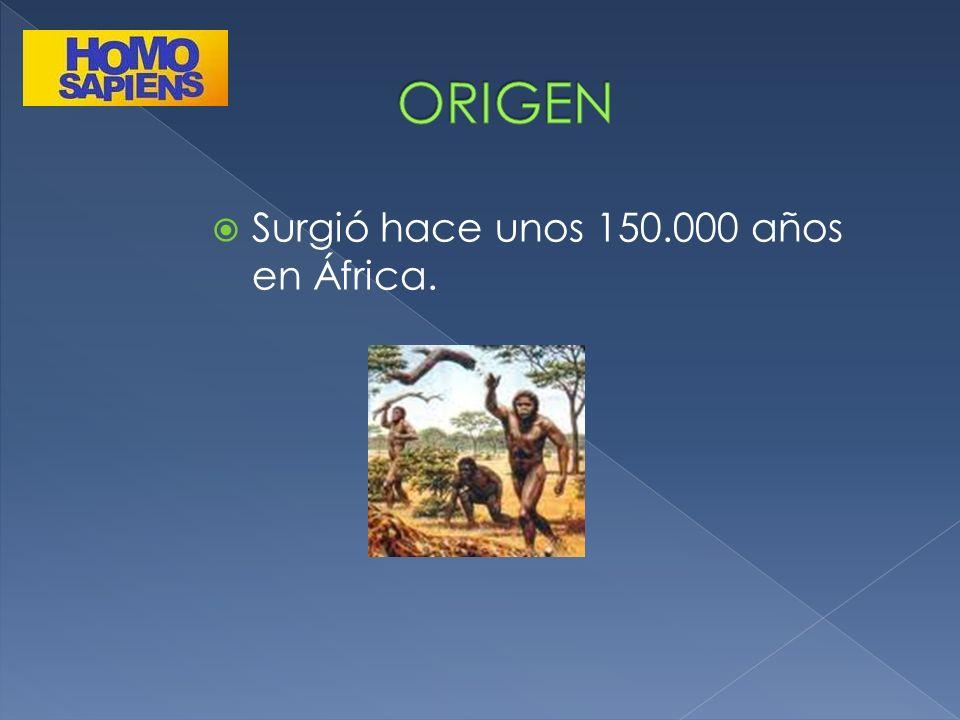 ORIGEN Surgió hace unos 150.000 años en África.