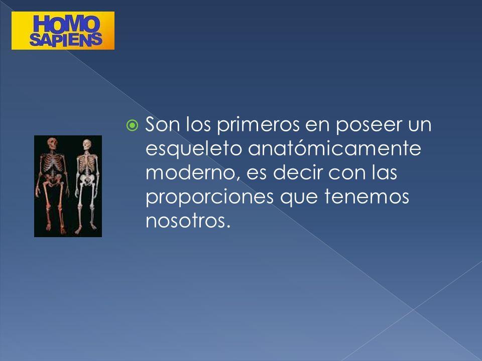 Son los primeros en poseer un esqueleto anatómicamente moderno, es decir con las proporciones que tenemos nosotros.