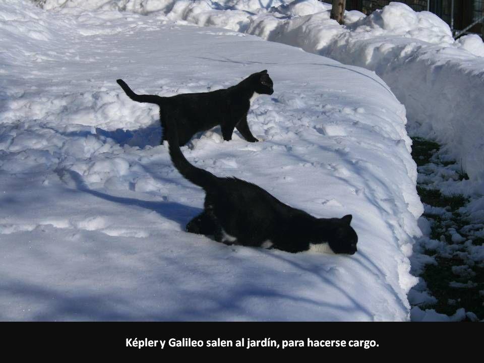 Képler y Galileo salen al jardín, para hacerse cargo.