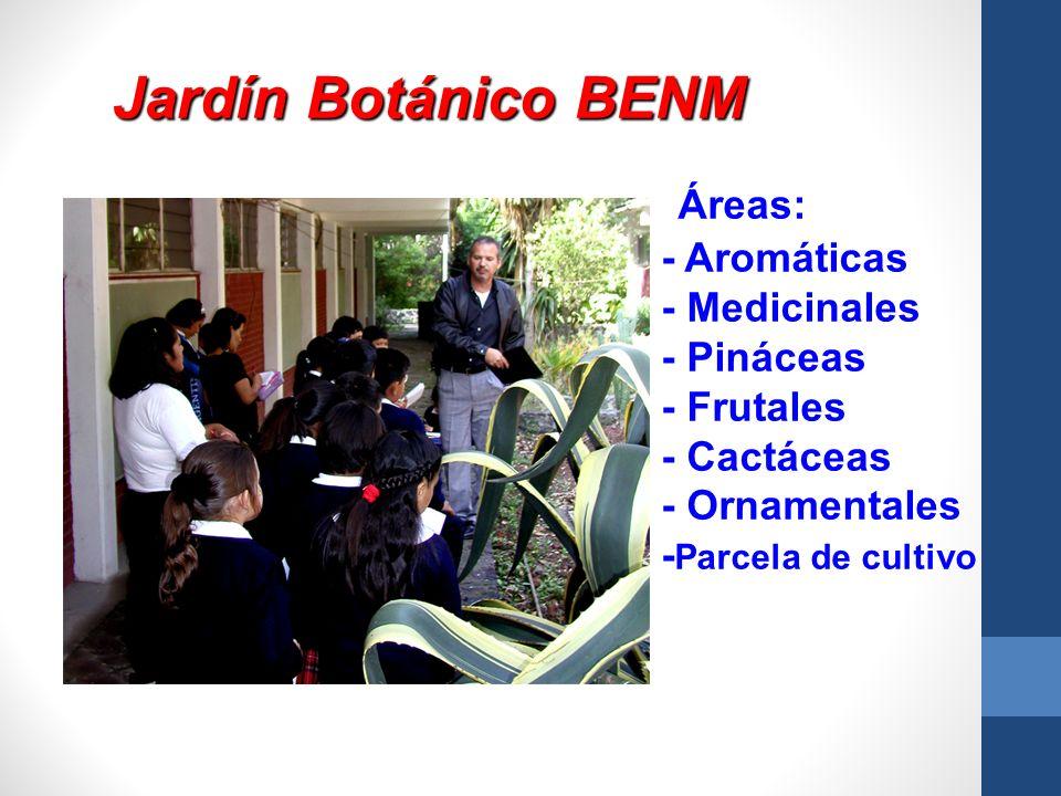 Jardín Botánico BENM Áreas: - Aromáticas - Medicinales - Pináceas
