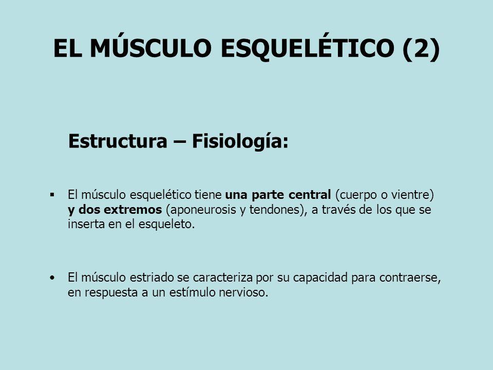 EL MÚSCULO ESQUELÉTICO (2)
