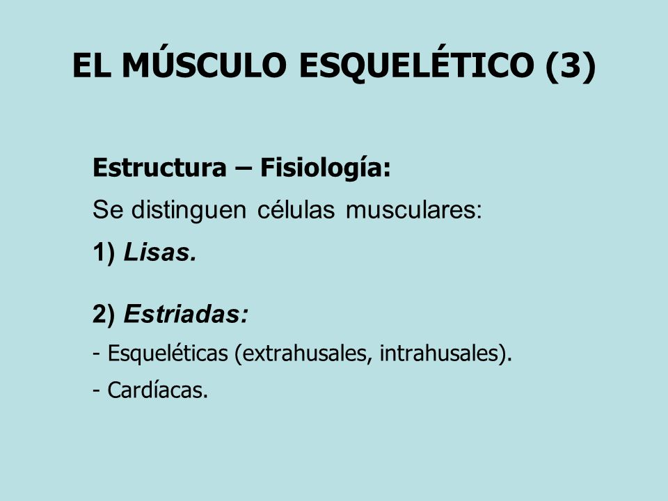 EL MÚSCULO ESQUELÉTICO (3)