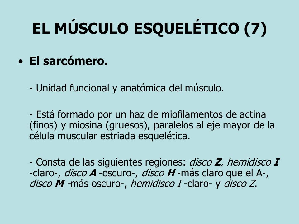 EL MÚSCULO ESQUELÉTICO (7)