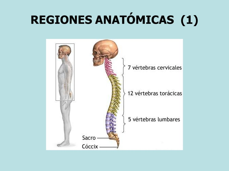 REGIONES ANATÓMICAS (1)