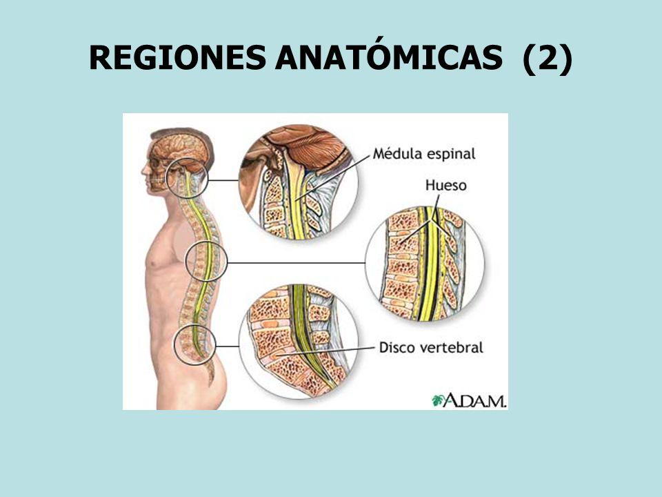 REGIONES ANATÓMICAS (2)