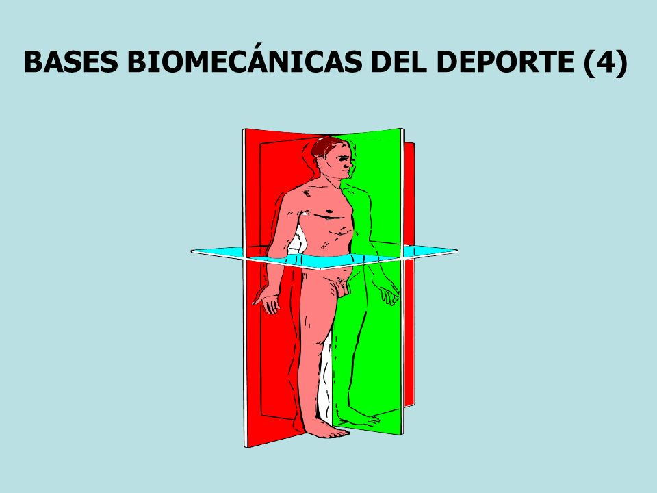 BASES BIOMECÁNICAS DEL DEPORTE (4)