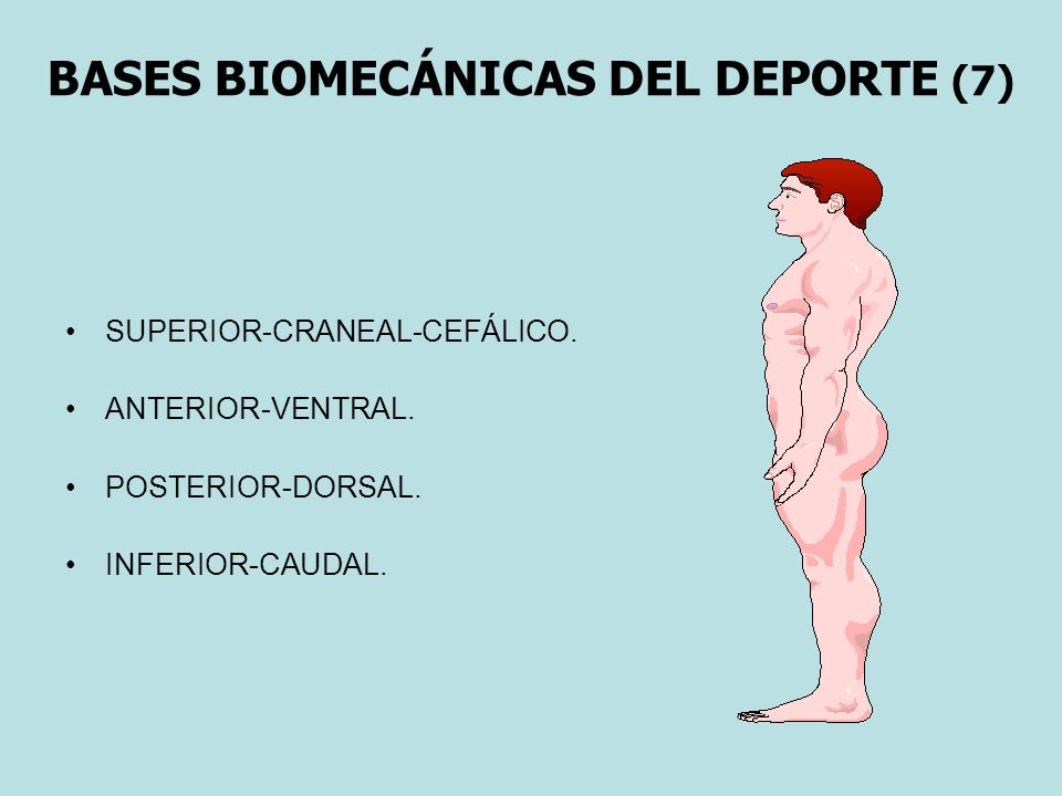 BASES BIOMECÁNICAS DEL DEPORTE (7)