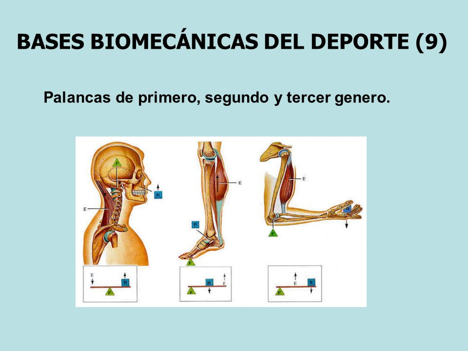 BASES BIOMECÁNICAS DEL DEPORTE (9)