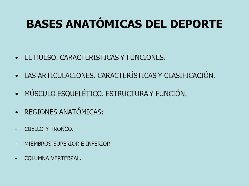 BASES ANATÓMICAS DEL DEPORTE