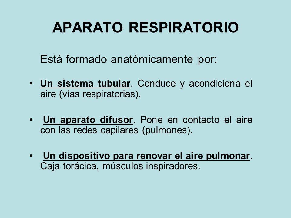 APARATO RESPIRATORIO Está formado anatómicamente por: