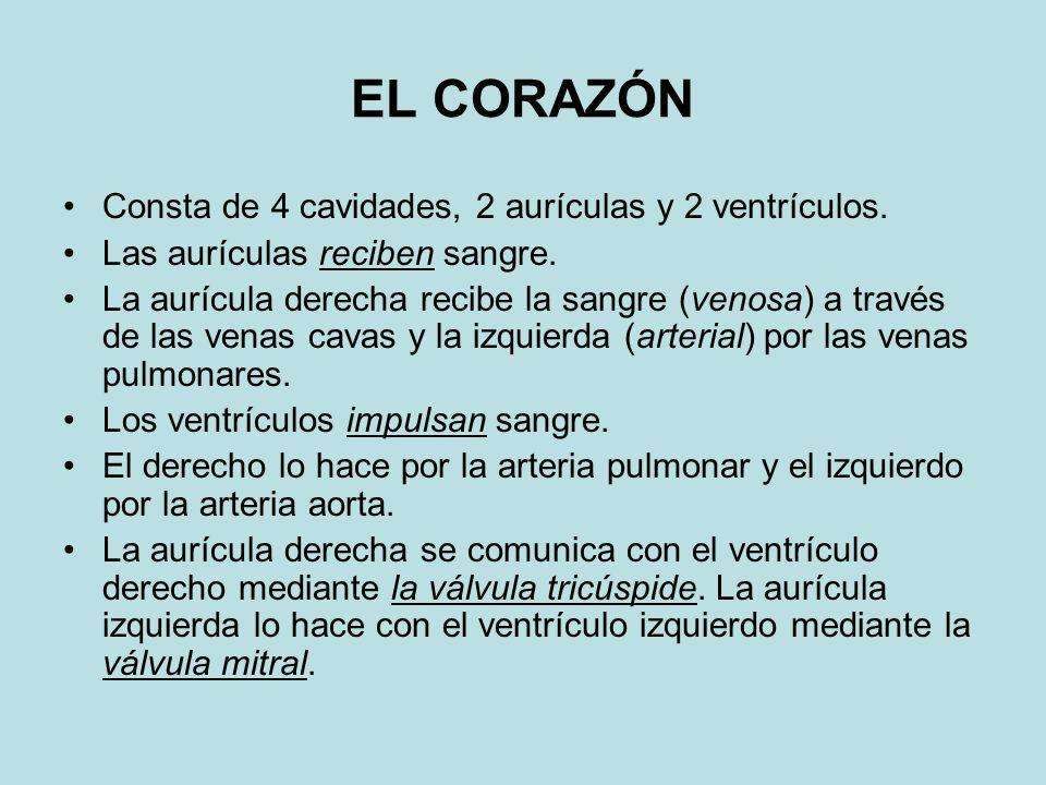 EL CORAZÓN Consta de 4 cavidades, 2 aurículas y 2 ventrículos.