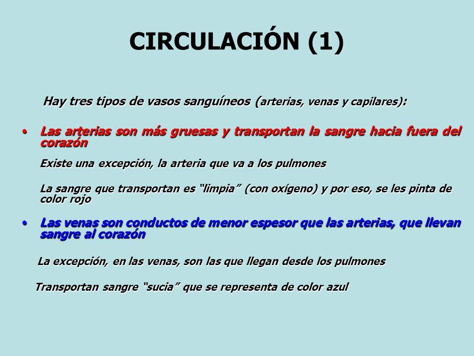 CIRCULACIÓN (1) Hay tres tipos de vasos sanguíneos (arterias, venas y capilares):