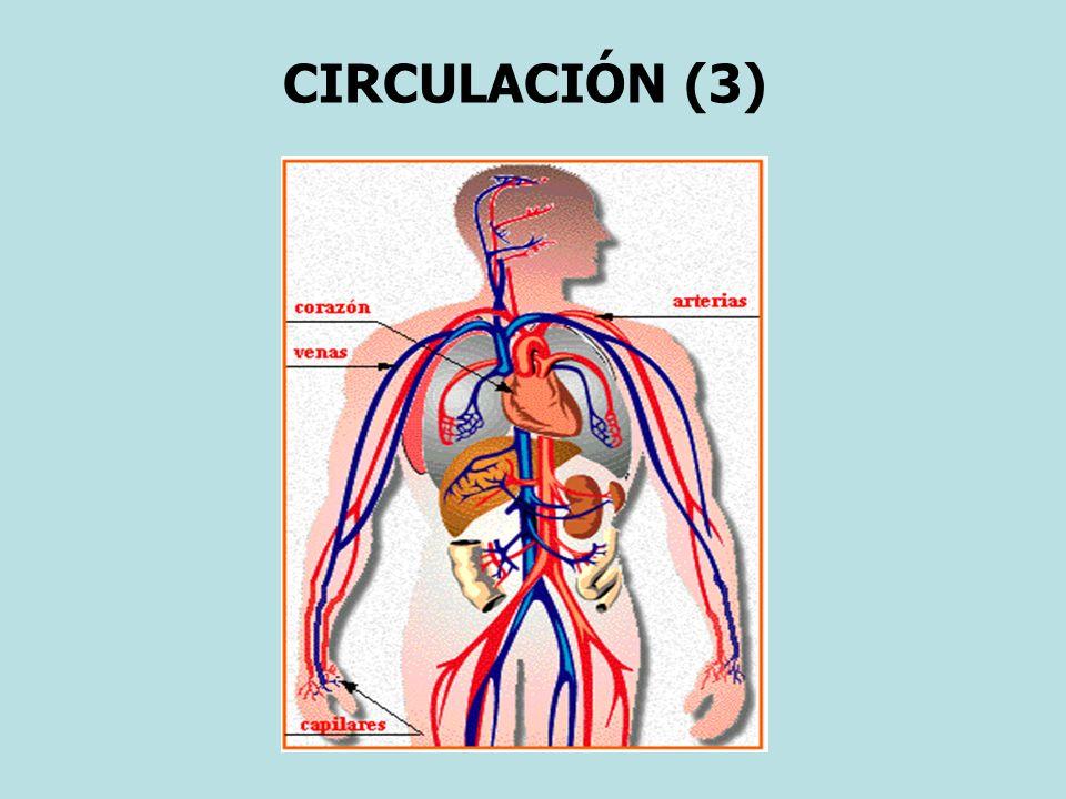 CIRCULACIÓN (3)