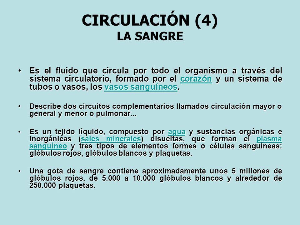 CIRCULACIÓN (4) LA SANGRE