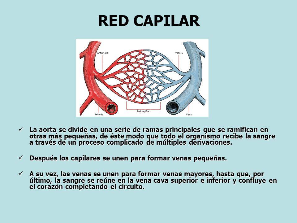 RED CAPILAR