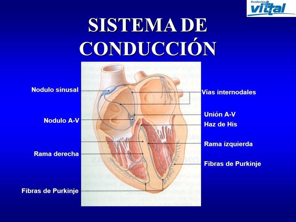 SISTEMA DE CONDUCCIÓN Nodulo sinusal Vías internodales Unión A-V