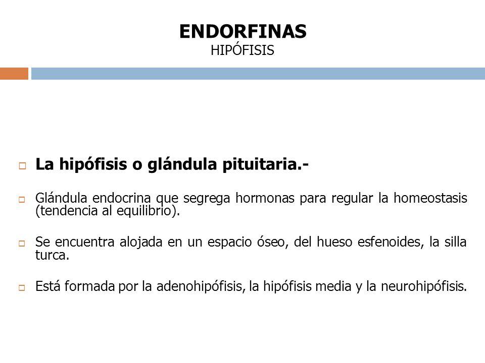 ENDORFINAS HIPÓFISIS La hipófisis o glándula pituitaria.-