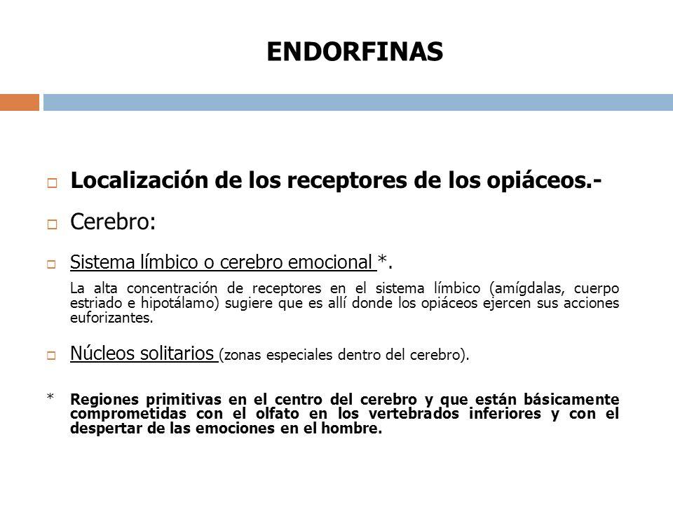 ENDORFINAS Localización de los receptores de los opiáceos.- Cerebro: