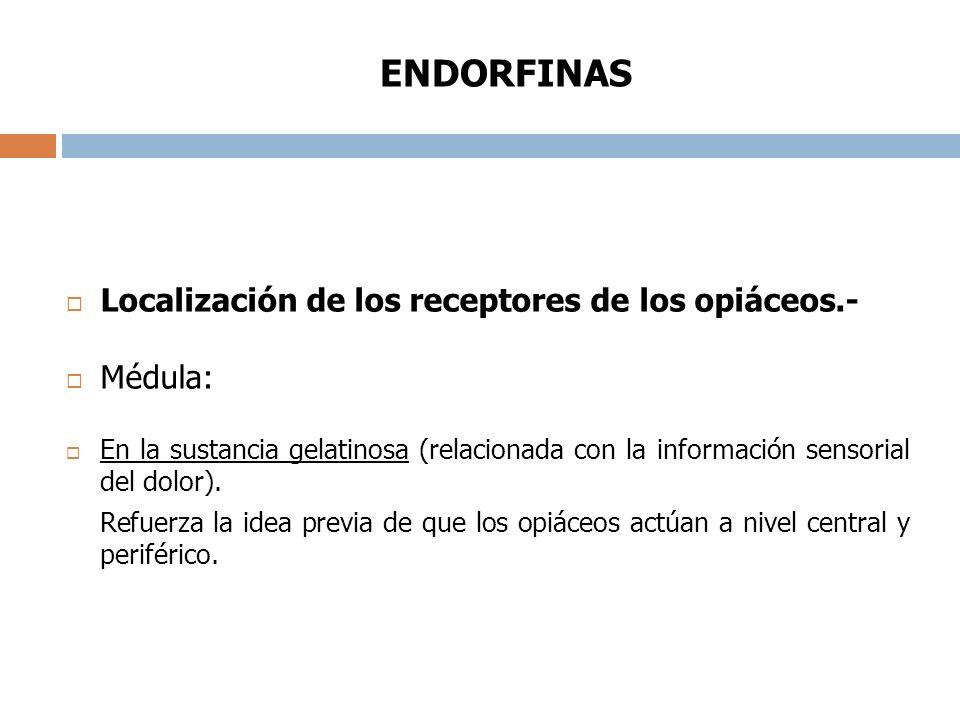 ENDORFINAS Localización de los receptores de los opiáceos.- Médula: