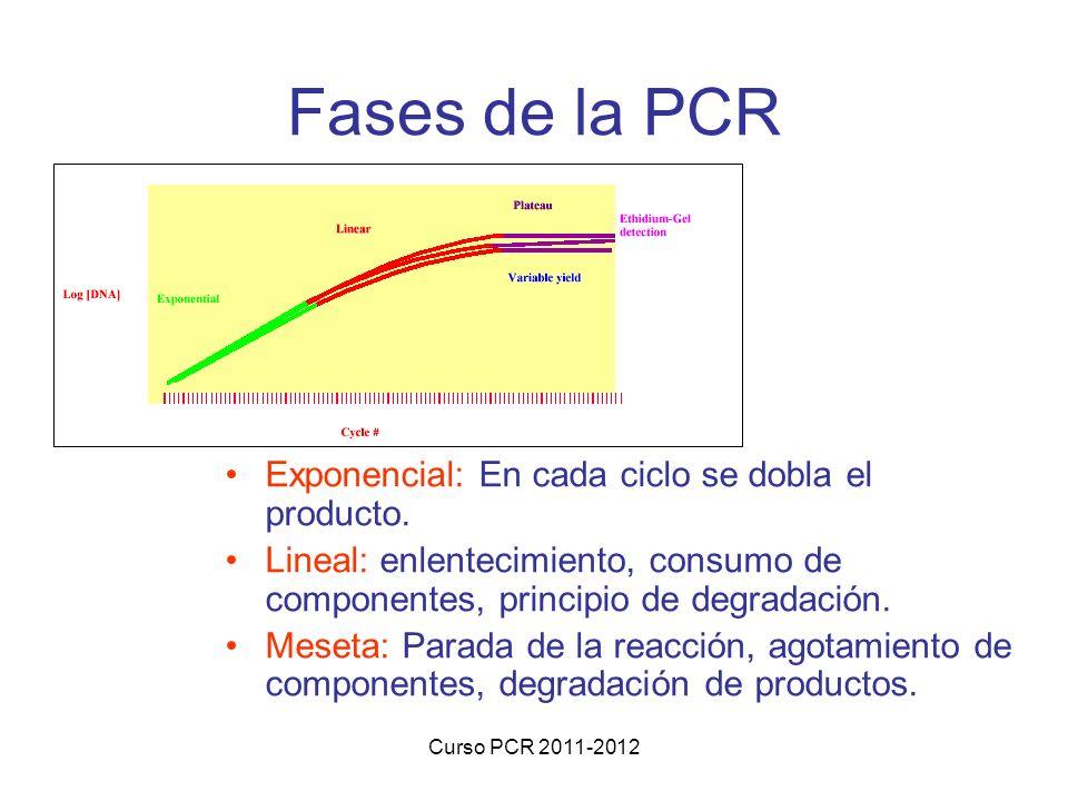 Fases de la PCR Exponencial: En cada ciclo se dobla el producto.