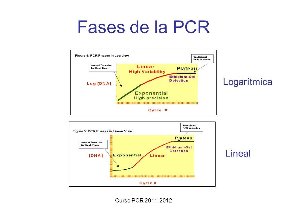 Fases de la PCR Logarítmica Lineal Curso PCR 2011-2012