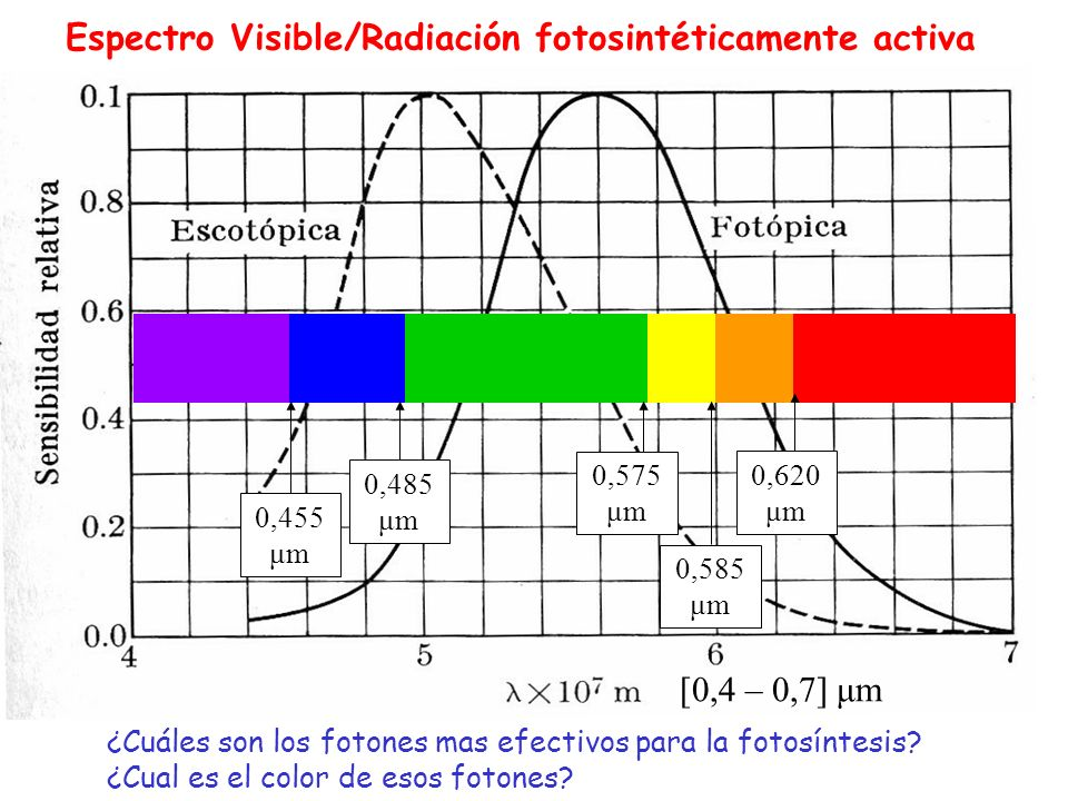 Espectro Visible/Radiación fotosintéticamente activa