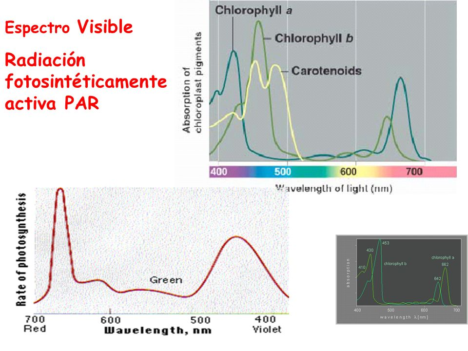 Radiación fotosintéticamente activa PAR