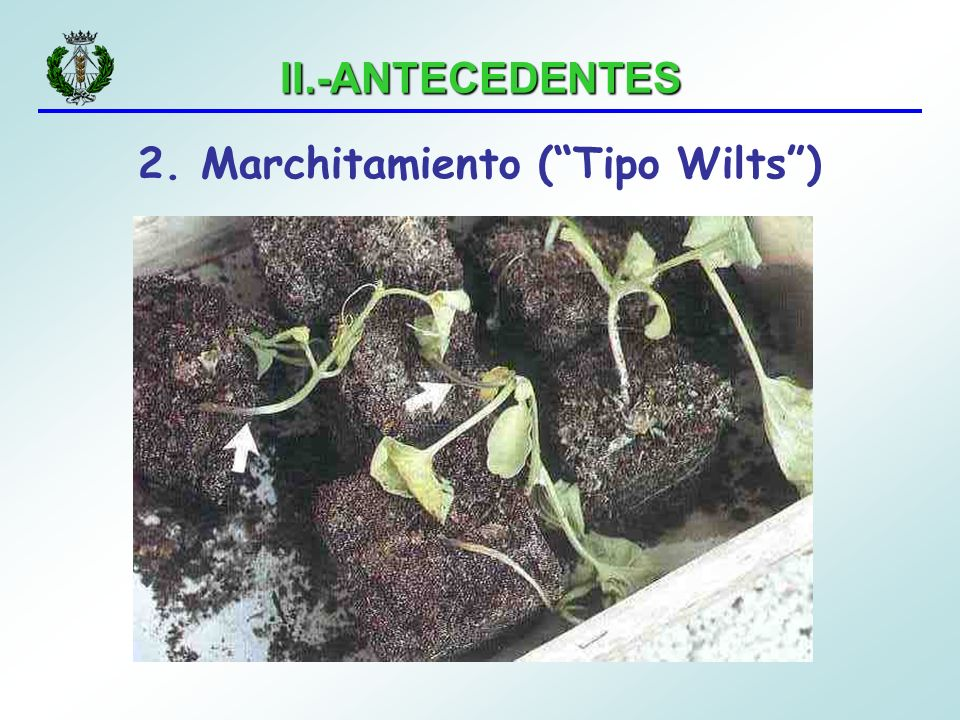 2. Marchitamiento ( Tipo Wilts )