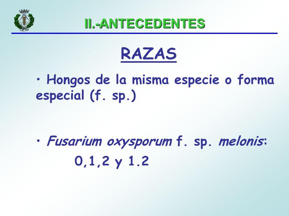 II.-ANTECEDENTES RAZAS. Hongos de la misma especie o forma especial (f. sp.) Fusarium oxysporum f. sp. melonis: