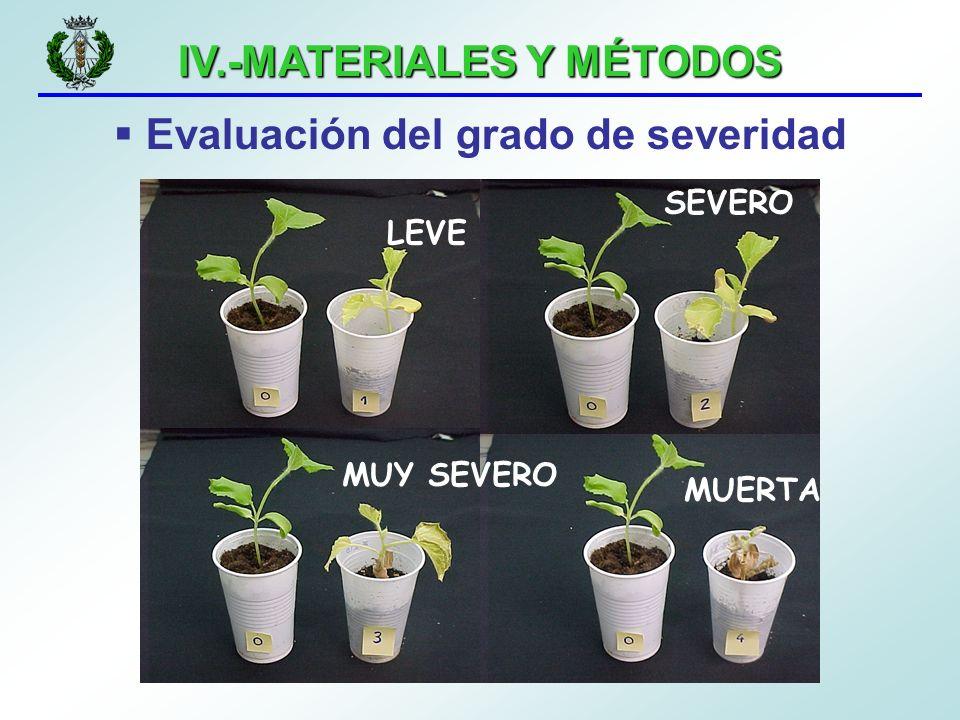 IV.-MATERIALES Y MÉTODOS Evaluación del grado de severidad