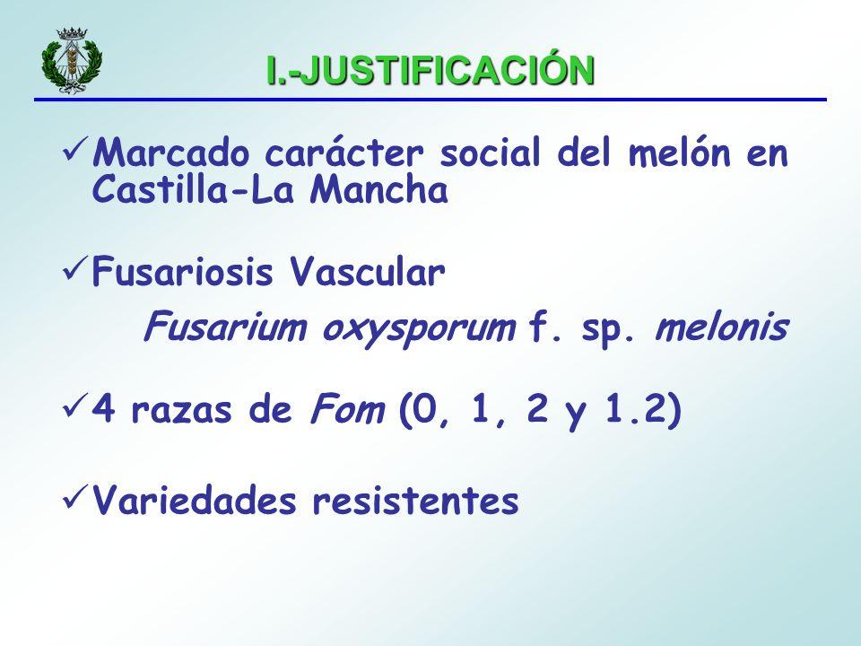 I.-JUSTIFICACIÓN Marcado carácter social del melón en Castilla-La Mancha. Fusariosis Vascular. Fusarium oxysporum f. sp. melonis.