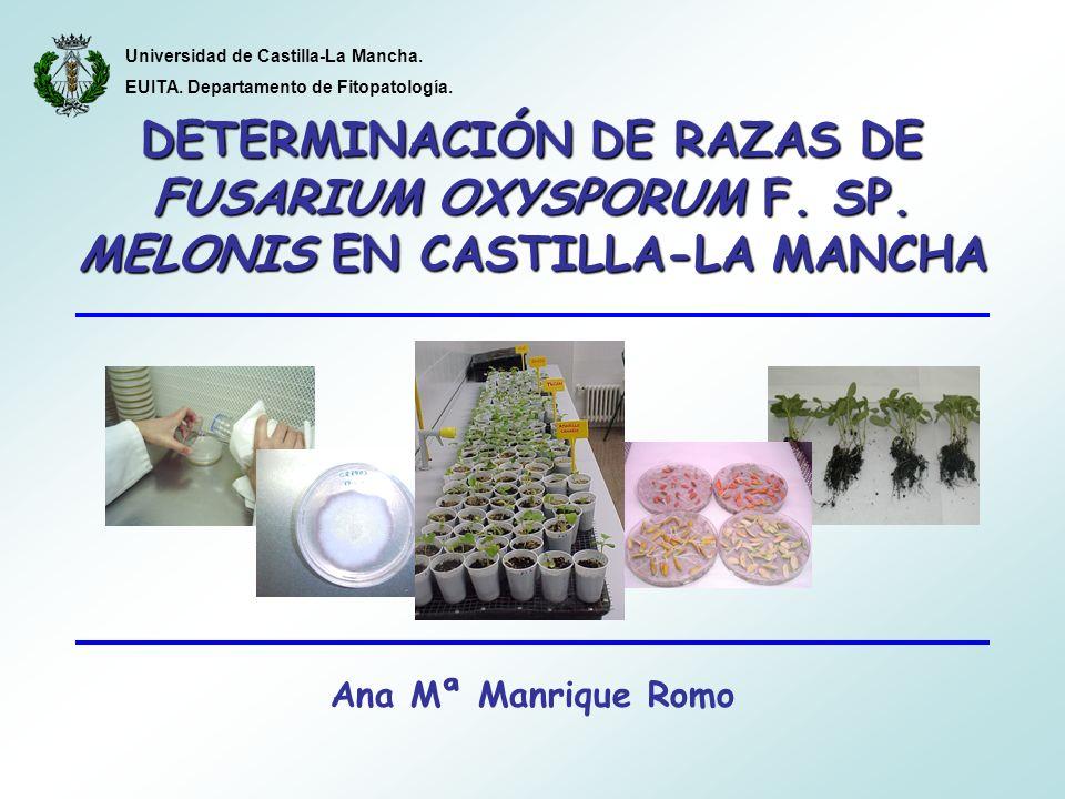 DETERMINACIÓN DE RAZAS DE FUSARIUM OXYSPORUM F. SP.