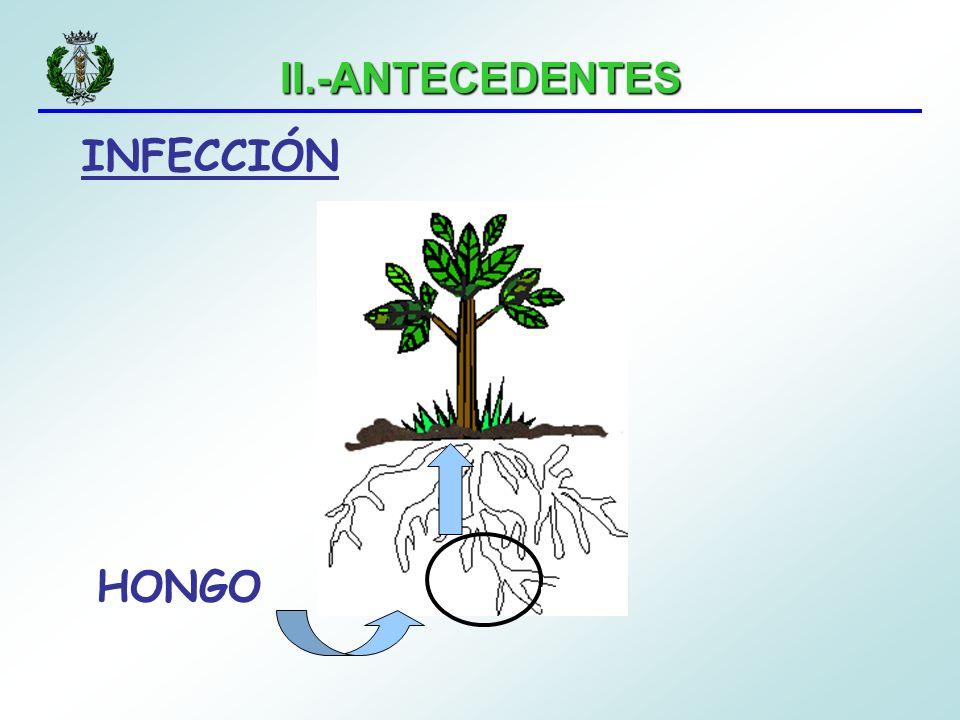 II.-ANTECEDENTES INFECCIÓN HONGO