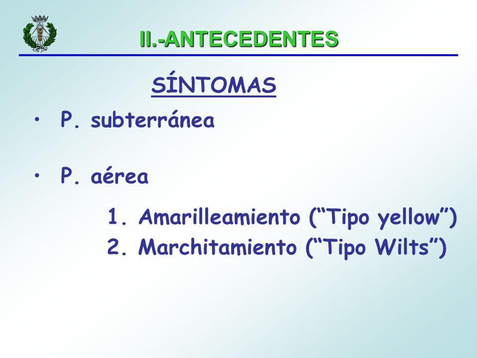 II.-ANTECEDENTES SÍNTOMAS. P. subterránea. P.