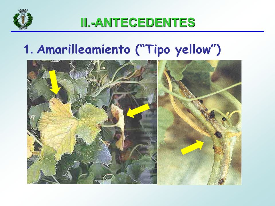 1. Amarilleamiento ( Tipo yellow )