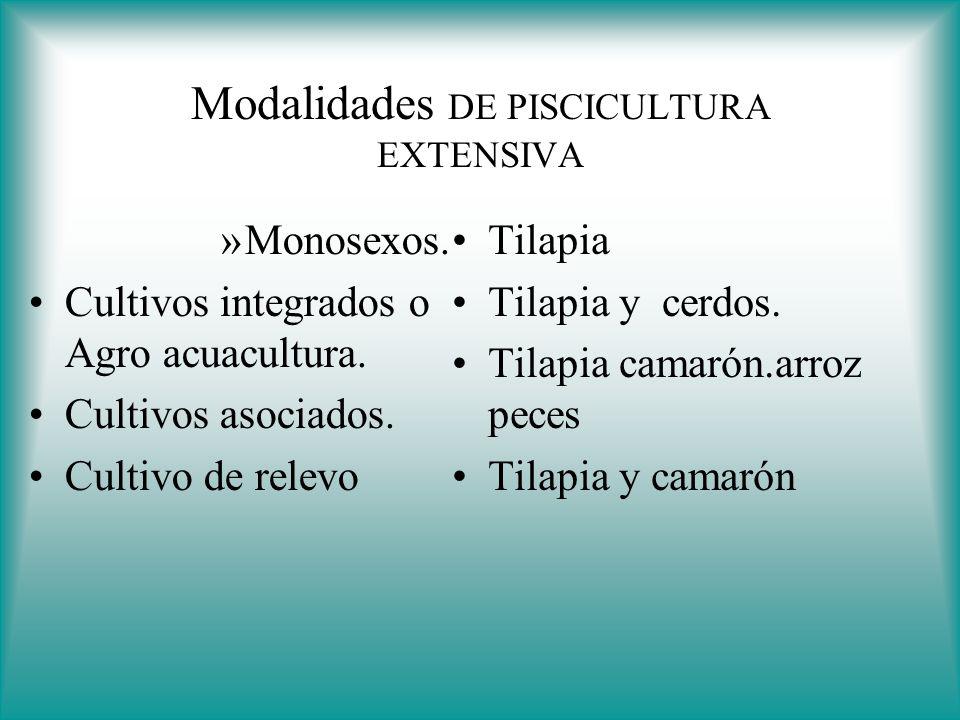 Policultivos o cultivos multitroficos ppt descargar for Densidad de siembra de tilapia
