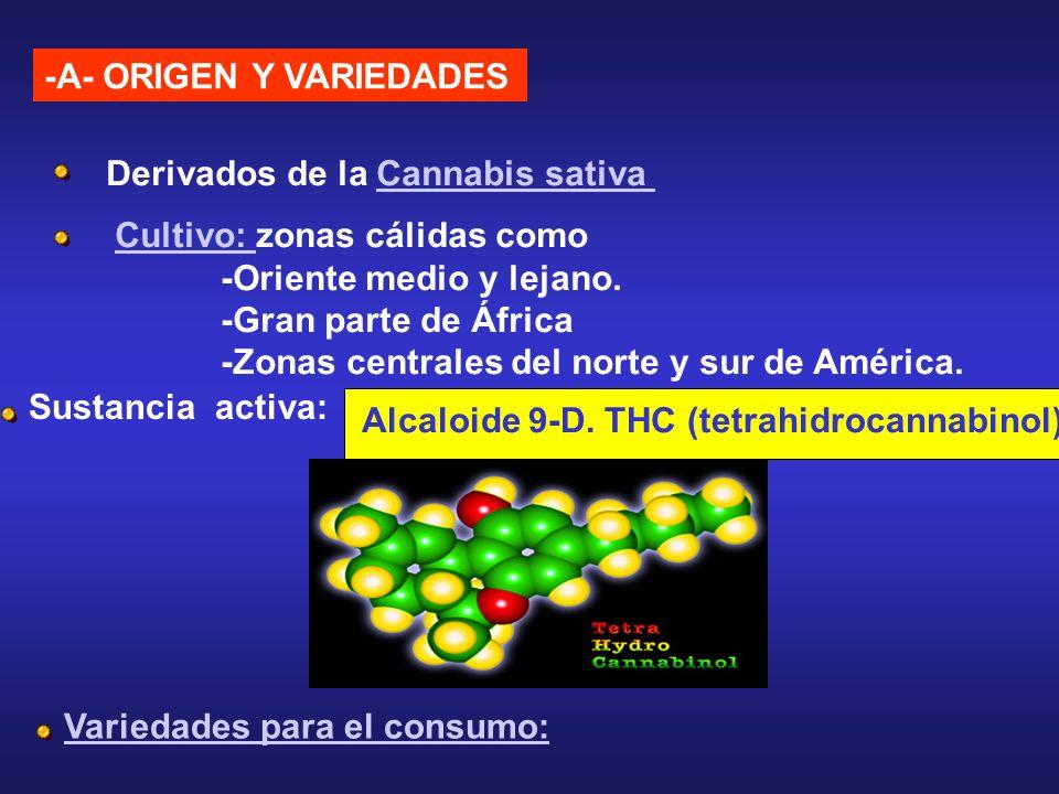 -A- ORIGEN Y VARIEDADES