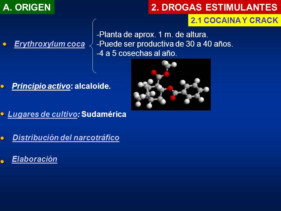 A. ORIGEN 2. DROGAS ESTIMULANTES 2.1 COCAINA Y CRACK