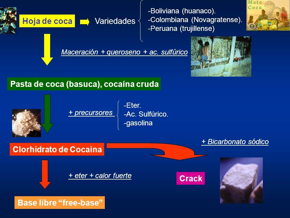 Pasta de coca (basuca), cocaína cruda