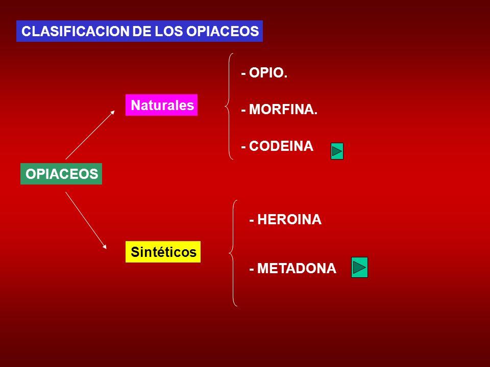 CLASIFICACION DE LOS OPIACEOS