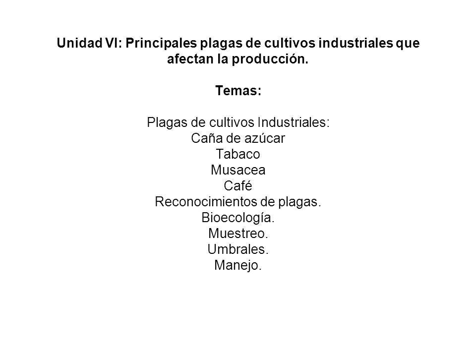 Unidad VI: Principales plagas de cultivos industriales que afectan la producción.