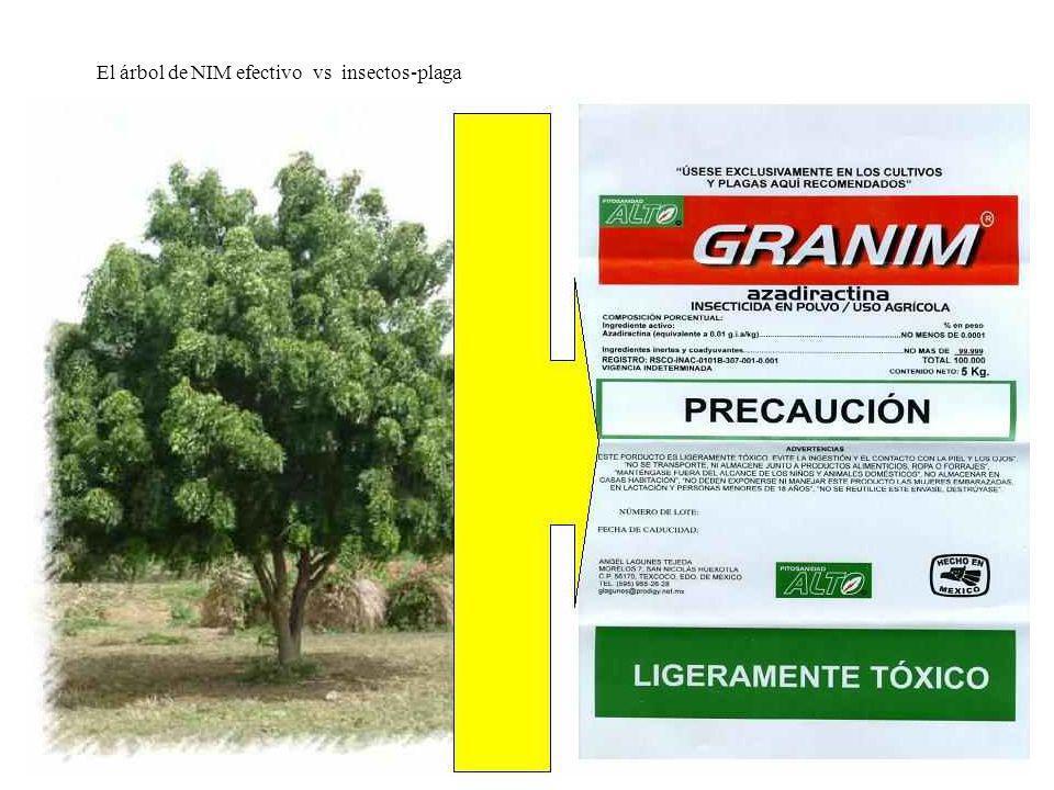 El árbol de NIM efectivo vs insectos-plaga