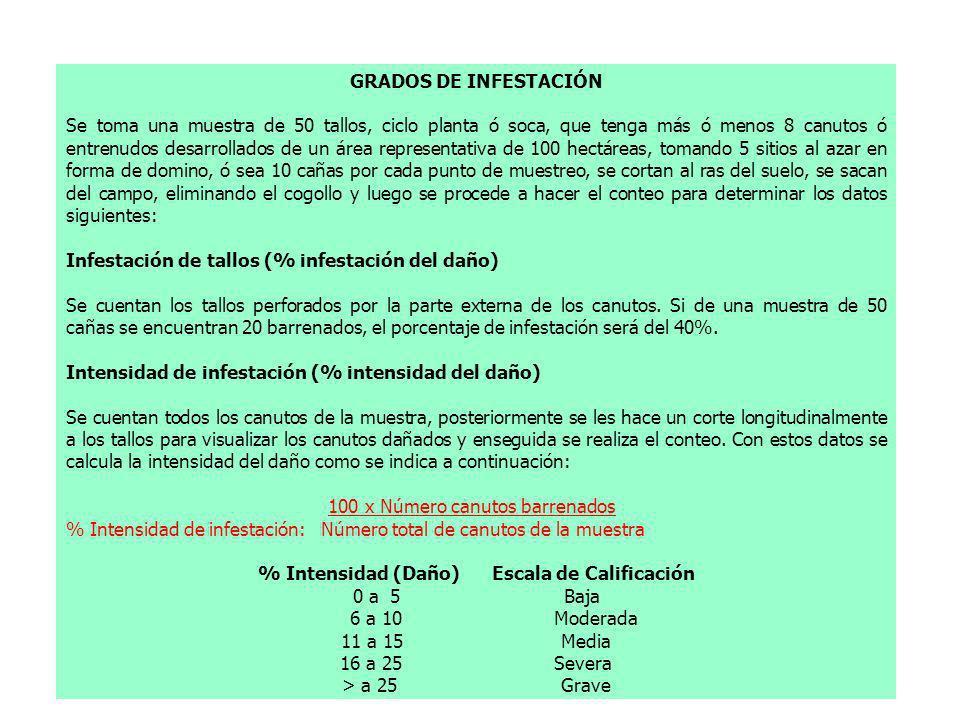 % Intensidad (Daño) Escala de Calificación