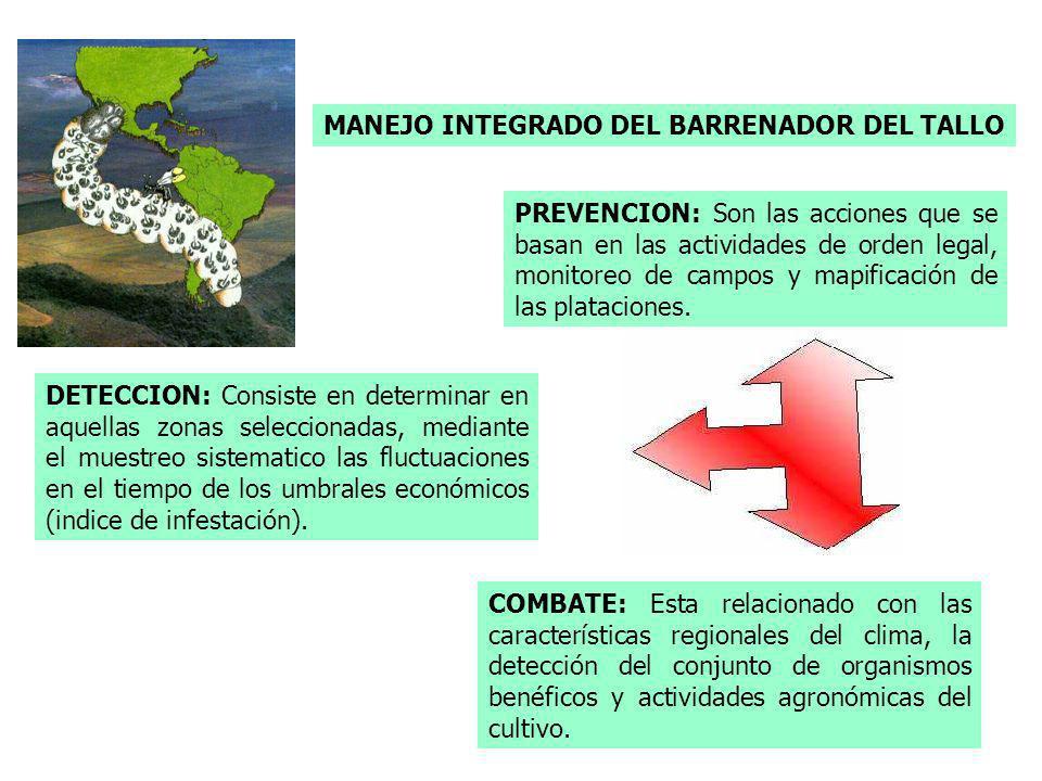 MANEJO INTEGRADO DEL BARRENADOR DEL TALLO