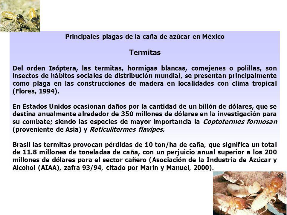 Principales plagas de la caña de azúcar en México