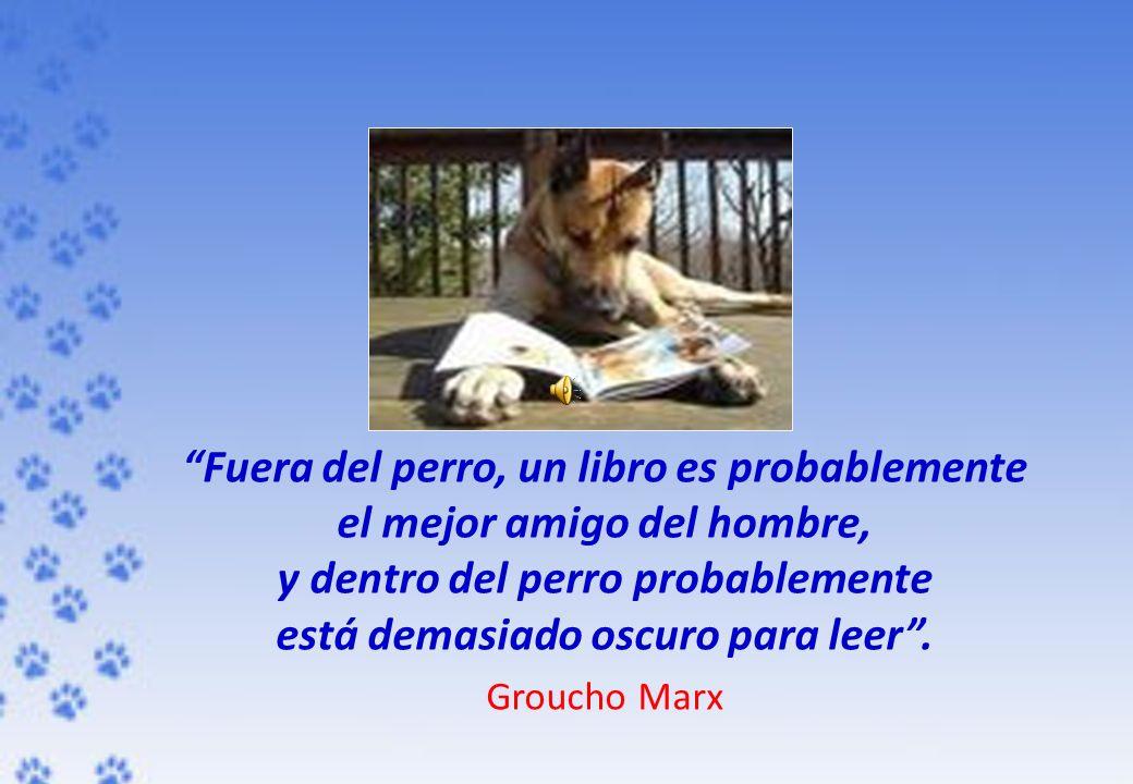 Fuera del perro, un libro es probablemente el mejor amigo del hombre,